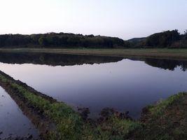 【写真】農園周辺の田んぼに張られた水面に映る三舟山