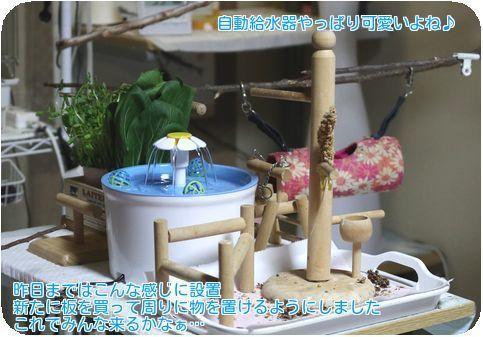 ①自動給水器