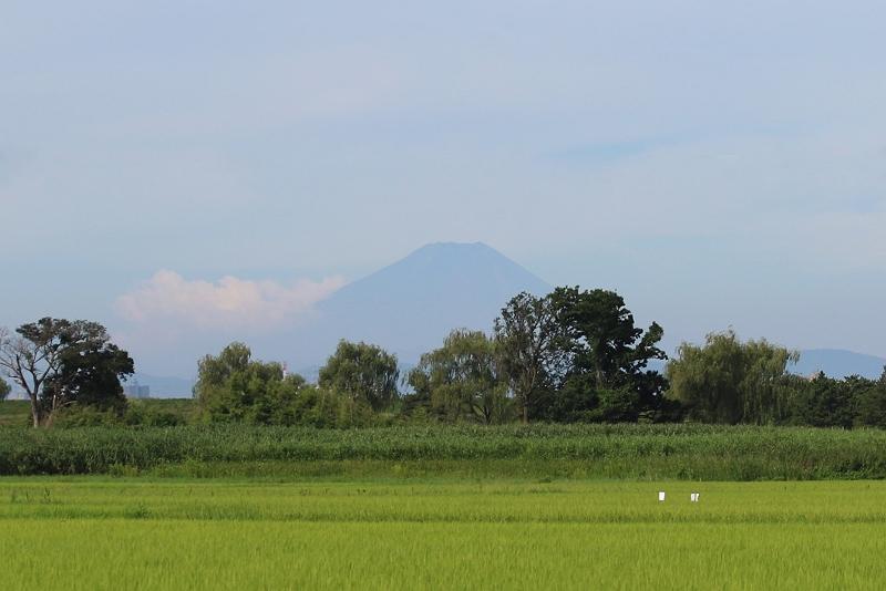 ①富士山488A4496_S
