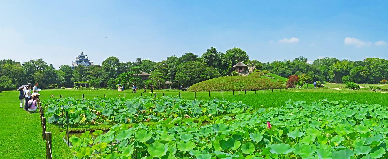20180715 後楽園今日の井田の大賀蓮の様子ワイド風景 (1)