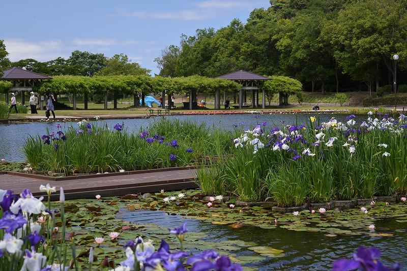 あやめ池公園1