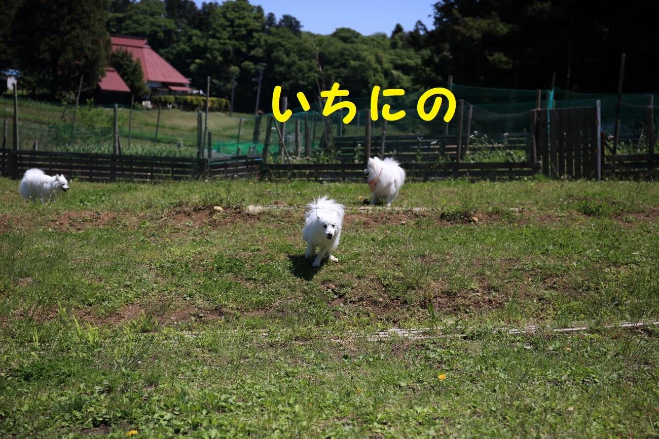11_20180704101441b36.jpg