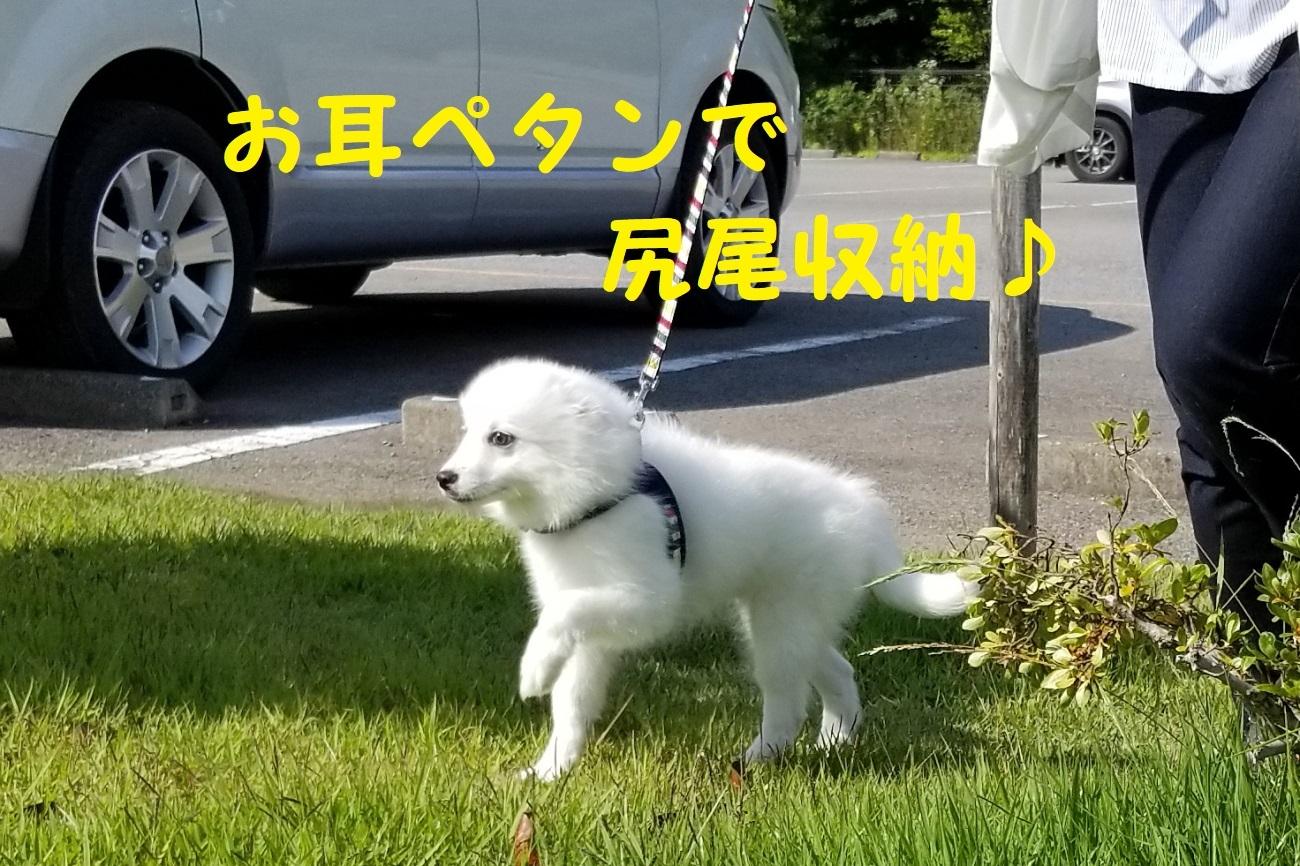 2_20180718093414d3c.jpg