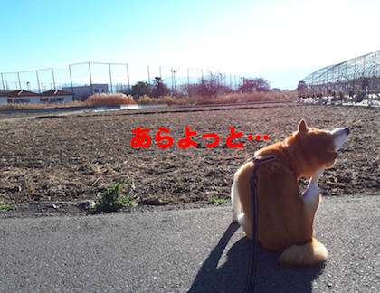 IMG091543-2.png