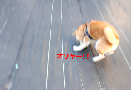 IMG092049-2.png