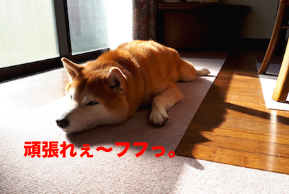 IMG112751-2.png