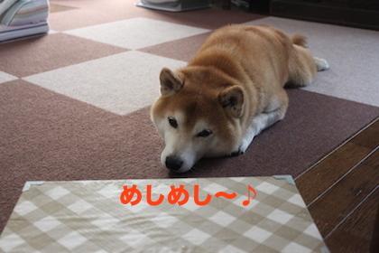IMG_6130.jpg