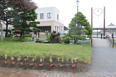 2018-06-13 余市駅前 紅志高校植栽活動 (13)