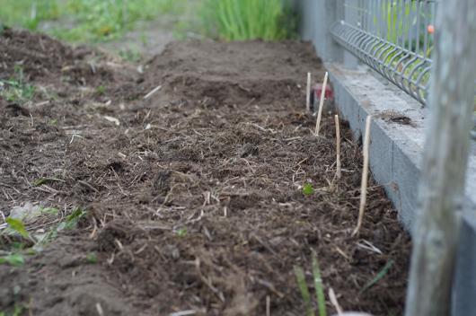 房総フィールドガーデン 生姜の植え付け 新しい畑