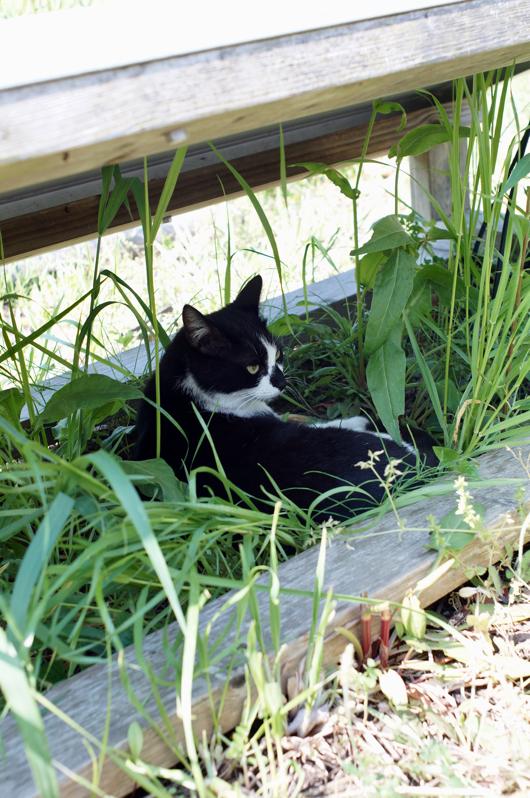 ソーラーパネルの下で日陰ぼっこしてる猫