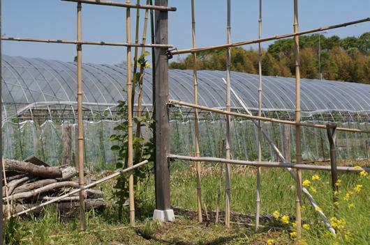 房総フィールド パーゴラの竹垣修復 崩れている竹垣
