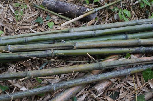 房総フィールド パーゴラの竹垣修復 竹の切り出し