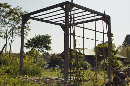 房総フィールド パーゴラの竹垣修復 古い竹垣を外す