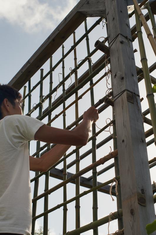 竹垣づくり イボ結び