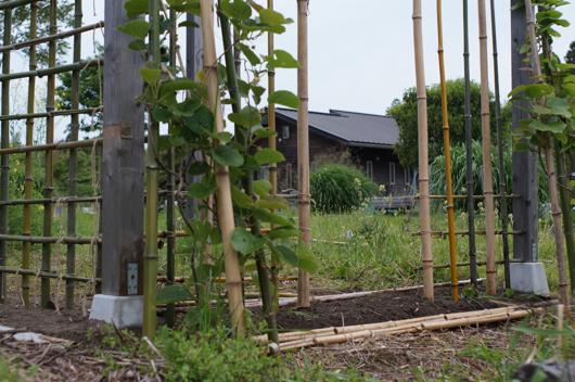 背面の竹垣