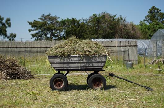 刈り取った草をゴリラカートで集める