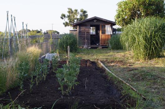 畑の拡張と草むしり