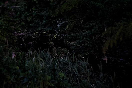 房総夜景 蛍の光
