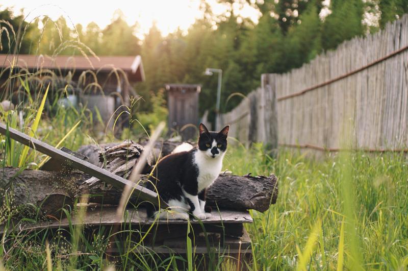 房総フィールド 猫