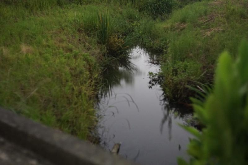 房総フィールド裏の小川