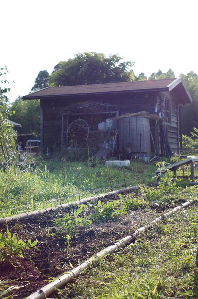 梅雨の房総フィールド 畑の雑草取り After