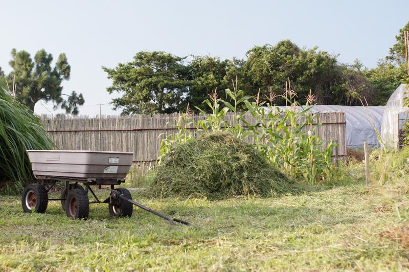 本日の収穫 雑草
