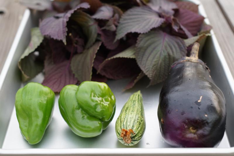 本日の収穫 紫蘇、ピーマン、ズッキーニ、ナス