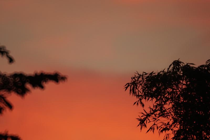 竹林に沈む夕日