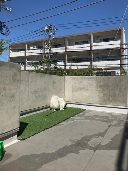 辻堂動物病院