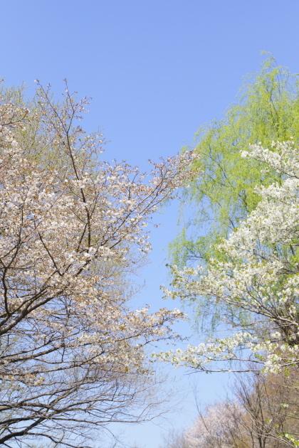 花見野川公園 2018