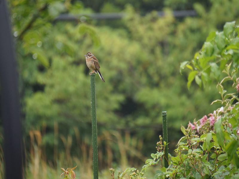 小鳥の訪問