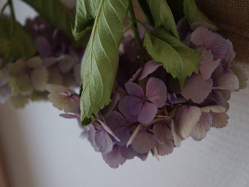 紫陽花ドライフラワー