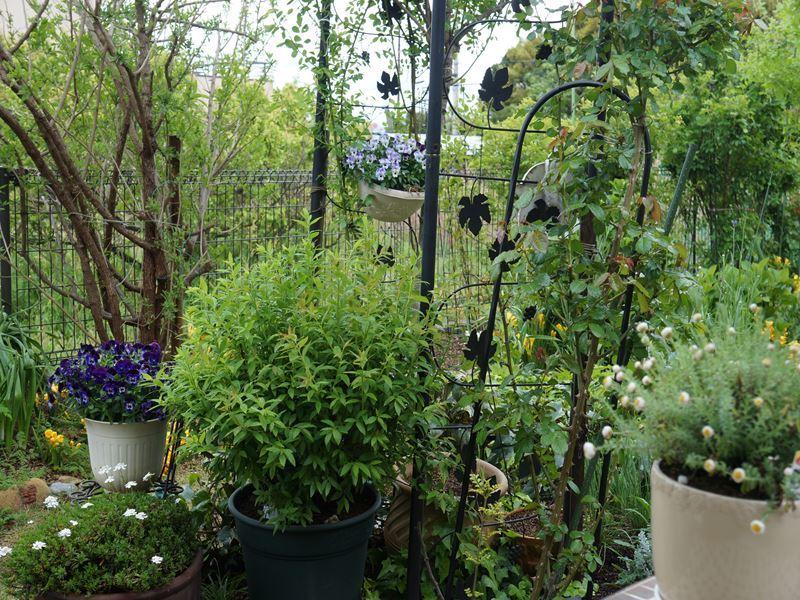 ガーデンの新緑