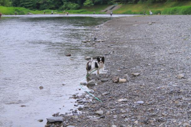 釜ヶ淵公園水遊び00057072