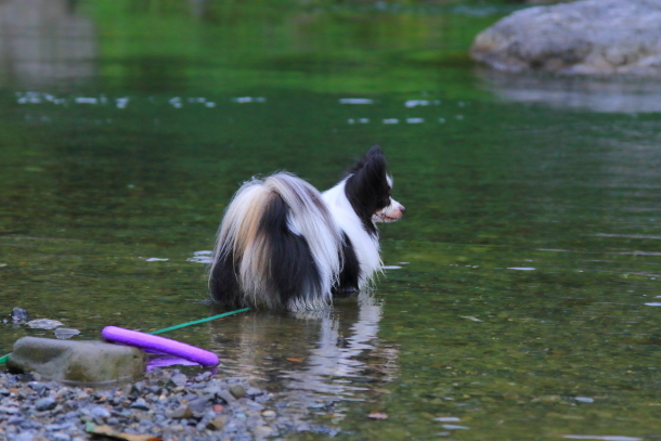 釜ヶ淵公園水遊び00057054