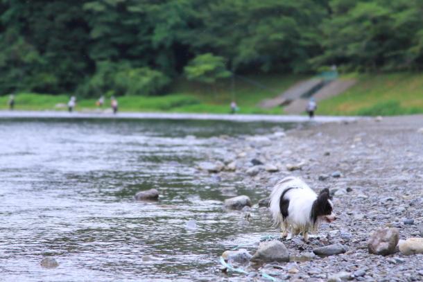 釜ヶ淵公園水遊び00057073