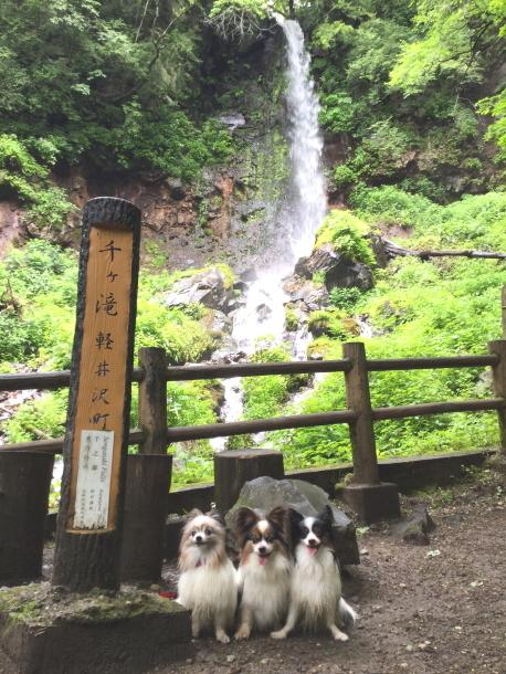 IMG_1570千ヶ滝3パピ