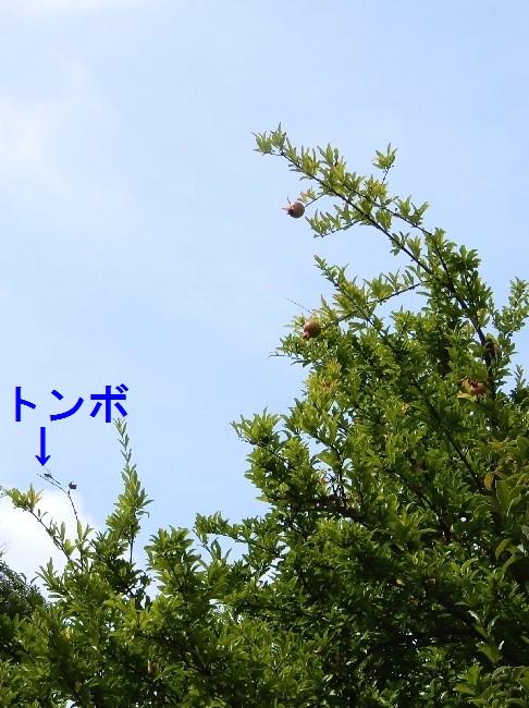 20180714-1 (1)