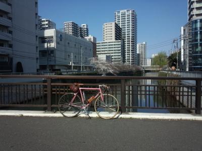 photo_derosa_hanami_megurogawa_0327_2_2019_0327.jpg