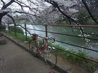 トーキョー桜巡り