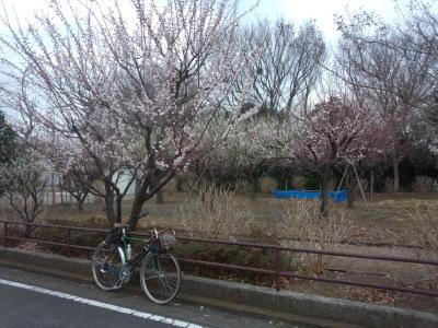 photo_randner_takaitokoro_8_2019_0226.jpg