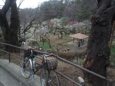 大倉山の梅見