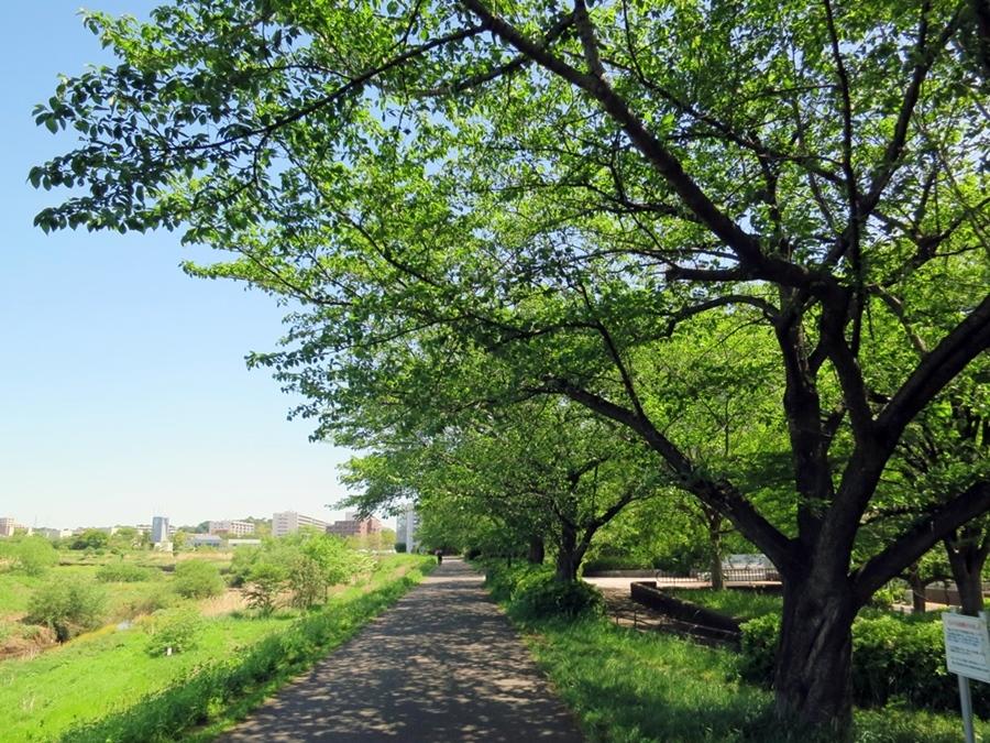 180426鶴見川-04