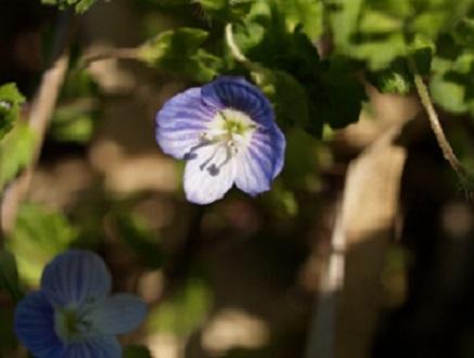 平成30年笛吹市の花