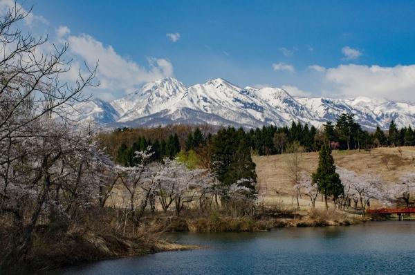 松ヶ峰桜3