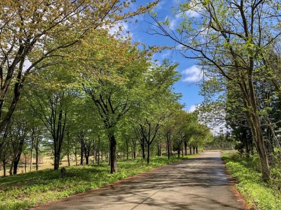 2018-04-26 松山の新緑
