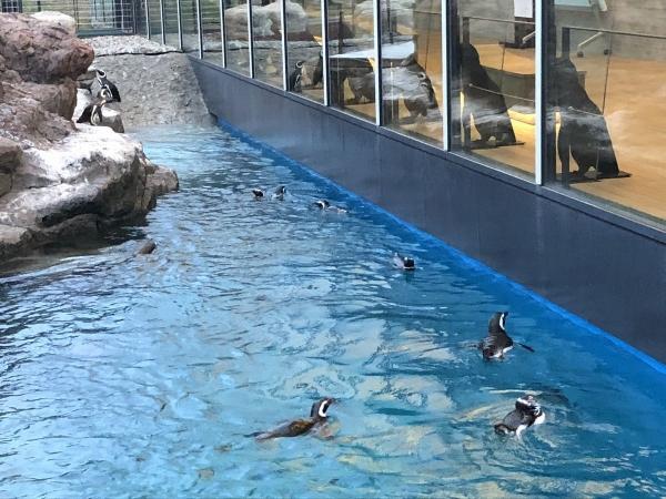 2018-06-26 泳ぐペンギン2