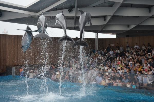 イルカ4匹ジャンプ4匹ジャンプ