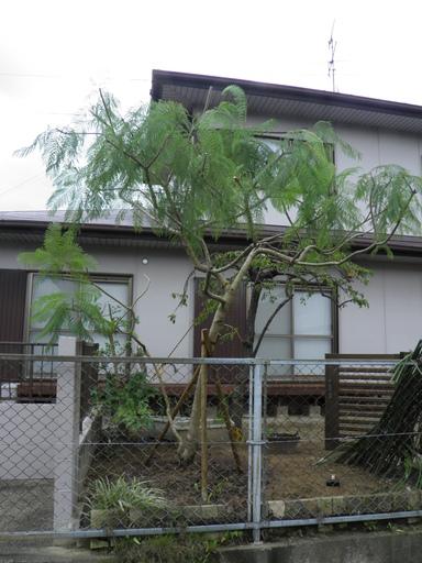 植木の倒木防止支柱設置