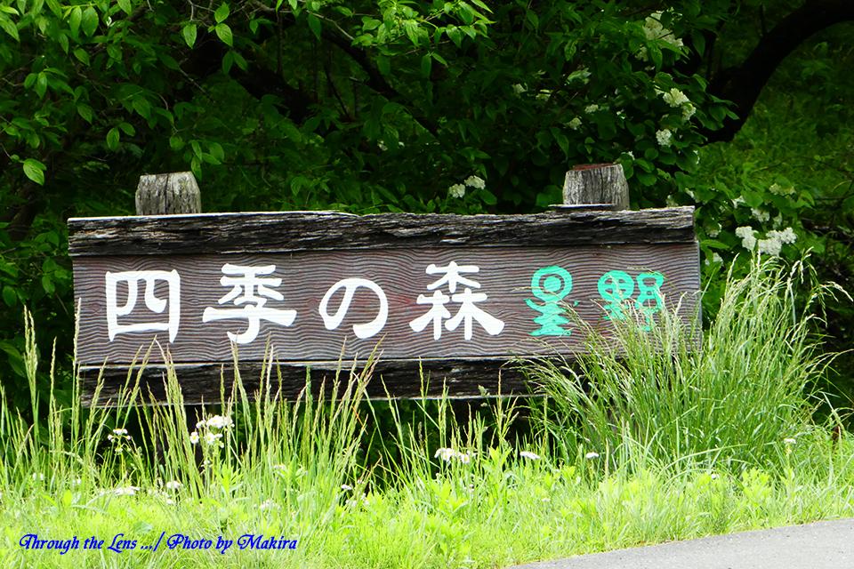 四季の森星野TZ1